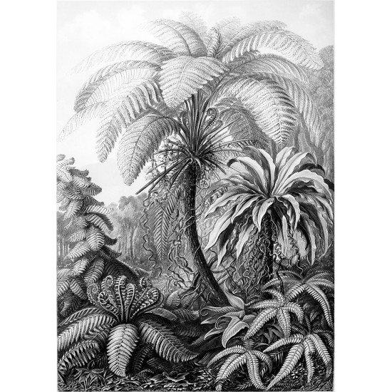 Textielposter Palmboom Haeckel zwart wit