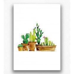 Poster - Cactussen