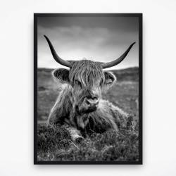 Poster - Schotse Hooglander 2
