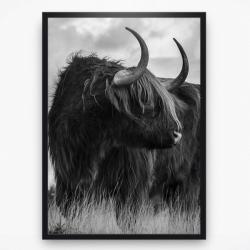Poster - Schotse Hooglander 3