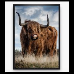 Poster - Schotse Hooglander kleur