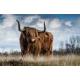 Tuindoek - Tuinposter Schotse Hooglander 133