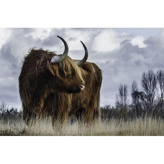 Tuindoek - Tuinposter Schotse Hooglander 134