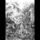 Textielposter Mos Haeckel zwart wit