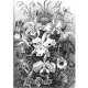 Textielposter Orchidee Haeckel zwart wit