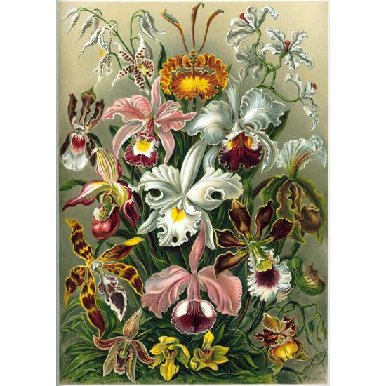 Textielposter Orchidee Haeckel kleur