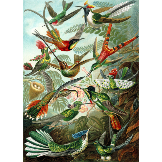 Textielposter Vogels Haeckel kleur