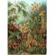 Textielposter Mos Haeckel kleur