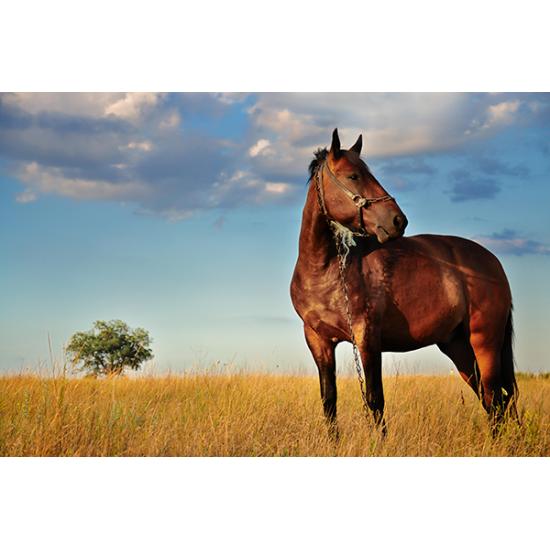Tuindoek - Tuinposter Paard 141
