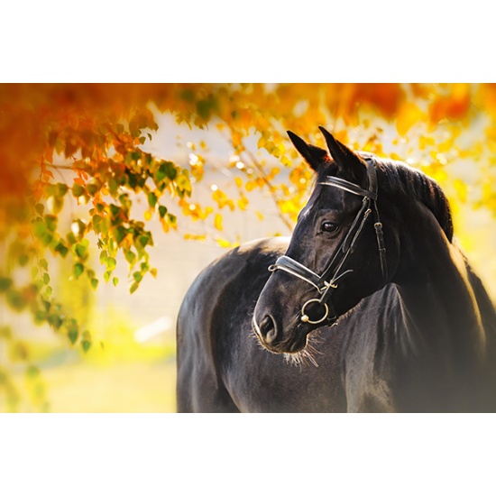 Tuindoek - Tuinposter Paard 142