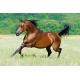 Tuindoek - Tuinposter Paard 144