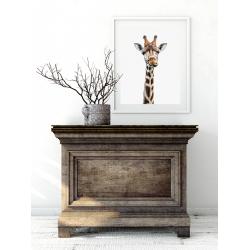 Poster - Funny giraffe