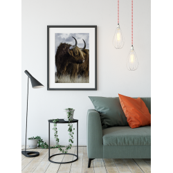 Poster - Schotse Hooglander 3 kleur