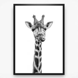 Poster - Funny giraffe black white